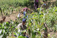 _O2A9990 (JauaMiranda) Tags: siembra chávez maíz caracas cosecha