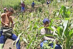 _O2A9943 (JauaMiranda) Tags: siembra chávez maíz caracas cosecha