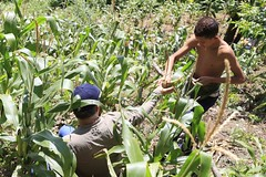 _O2A9940 (JauaMiranda) Tags: siembra chávez maíz caracas cosecha