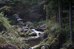 Clairière Cristaline (Aphélie) Tags: mont mitake 御岳 山 mount forest forêt 森 rivière river 川