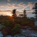Sunrise at Bear Rocks Preserve