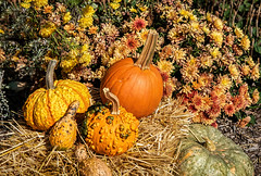 Pumpkins and mums (Millie Cruz (On and Off)) Tags: pumpkins mums colorful orange yellow fall autumn patchesfamilycreamery lebanonpennsylvania atsh thisissooctober haybale squash pennsylvania farm farming agriculture country rural decoration