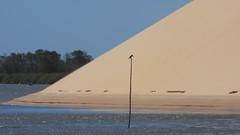 Delta do Parnaíba, PI - Brasil (sileneandrade10) Tags: sileneandrade deltadoparnaíba areia dunas rio mar pássaro natureza nature nikon nikoncorporationcoolpixp1000 nikoncoolpixp1000 martimpescador