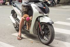 (kuuan) Tags: voigtländerheliarf4515mm manualfocus mf voigtländer15mm aspherical f4515mm superwideheliar apsc sonynex5n saigon hcmc vietnam dog ears street