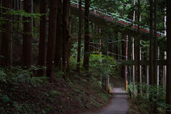 Metro forestier (Aphélie) Tags: 森 forêt forest mount 山 御岳 mitake mont