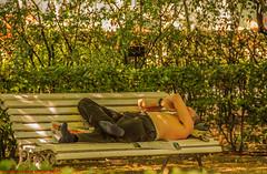 ROBADO REAL JARDÍN BOTÁNICO DE MADRID-Madrid (FRANCISCO DE BORJA SÁNCHEZ OSSORIO) Tags: realjardinbotanicodemadrid realjardinbotanico españa exposure enfoque encuadre exposicion flechazo focus focuspoint foco framing flor flower flores flowers funny foto love light luz life lovely amor arrow autumn otoño verano vida spring shot summer passion photo pasión primavera robado timeexposure tiempodeexposición temperaturadecolor color colour composition composición colourtemperature detalle detalles detail details desenfoque disparo divertido delicado delicate dof depthoffield dahlia nature naturaleza nice narciso lirio