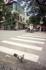 (kuuan) Tags: voigtländerheliarf4515mm manualfocus mf voigtländer15mm aspherical f4515mm superwideheliar apsc sonynex5n saigon hcmc vietnam street chicken road
