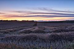 groovy sunset (John Andersen (JPAndersen images)) Tags: albertafarm calgary canonef2470f28iiusm canon6d