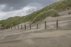 with the wind... (Woewwesch) Tags: beach autumn dunes grasses dunegrasses wind sand cloudy stormy noordwijkerhout northsea
