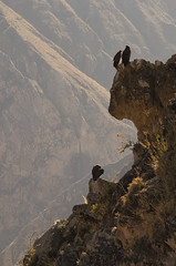 Condor (roberto_86) Tags: perù peru cruz condor colca canyon