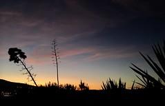 Backlight (Jocarlo) Tags: backlight amanecer creative creativa cruceros flickrclickx flickrstruereflection1 flickraward flickrphotowalk flickr fotografía fotos fotografias josecarvajallopez sky luz light nubes sun sunset sol