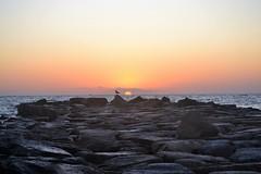 Sunrise - Amanecer (En memoria de Zarpazos, mi valiente y mimoso tigre) Tags: seagull silhouette sun sea sunrise seascape espigón playa beach mar cielorojo skyred skyscape skyfire breakwater gaviota silueta alicante nikon