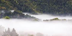 la première mer de nuage de l'automne (mrieffly) Tags: hautesvosges htrhin alsace valléedelathur geishouse canoneos50d 100400issériel merdenuages volutes foretvosgienne