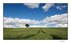 L'horizon (Rémi Marchand) Tags: paysage landscape champ céréale blé arbre horizon campagne ruralité côtedor agriculture salives bourgogne france canoneos5dmarkiii skyline elitegalleryaoi bestcapturesaoi aoi