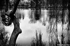 0755 - Vincennes, 1975 (ikaune) Tags: nb bw noiretblanc blackandwhite ikaune argentic argentique monochrome vincennes lac daumesnil