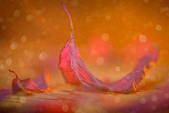 Autumn colors (Martin Bärtges) Tags: naturliebhaber naturfotografie natur naturephotography naturelovers nature nikonphotography nikonfotografie mirrorless z6 nikon herbstfarben herbst autumncolors farbenfroh colorful gels blitzanlage blitz flash inside drin studiophotography studiofotografie studio nebelmaschine nebel fog gelb yellow rot red orange laub blätter leaves