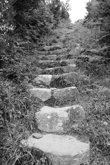 . (just.Luc) Tags: stairs steps marches escalier trap treden outside bn nb zw monochroom monotone monochrome bw italia italy italien italie italië ligurië liguria ligurie ligurien italiaanserivièra italienischeriviera italianriviera rivieraligure cinqueterre europa europe