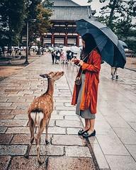 Nara, Japan (Murat Guneri) Tags: ifttt instagram nara japan