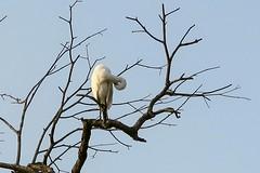 Bird spotting (Bex.Walton) Tags: malaysia asia travel borneo sabah borneoecotours wildlife sukau kinabatangan kinabatanganriver
