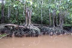 Wildlife spotting (Bex.Walton) Tags: malaysia asia travel borneo sabah borneoecotours wildlife sukau kinabatangan kinabatanganriver