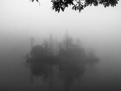 Tree Castle (H.Treuth) Tags: tree island fog misty lake leaves natural reflection silhouette blackandwhite bw blackandwhitephotography landscapephotography yilan taiwan fujifilm fujifilmx20 2015