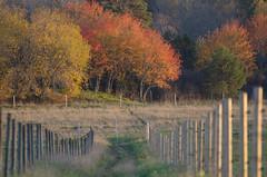 In the afternoon (RdeUppsala) Tags: uppsala uppland hågadalen trees träd forest bosque árboles wood autumn otoño höst naturaleza nature natur paisaje landscape landskap sverige suecia sweden countryside ricardofeinstein