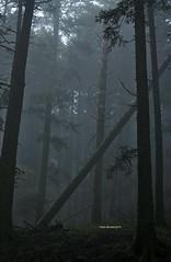 The fallen (RoyBatty83) Tags: pentax pentaxk5 pentaxiani 55300 pentaxdahd55300mmf458edwr pentaxdahd55300wr dahd55300wr camaldoli casentino parconaturale tuscany appennino appennine parconaturaledelleforestecasentinesi lama fangacci scalandrini ridracoli eremodicamaldoli trekking hike hiking green nature naturephotography trees woods naturalparks autumncolors autumn autumnleaves