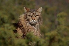oktober elvis (KvikneFoto) Tags: katt cat elvis tamron nikon