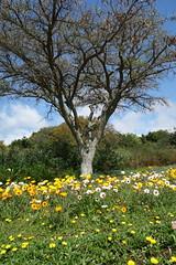 Südliches Afrika - September 2019 (O!i aus F) Tags: südafrika afrika osm k5 kirstenbosch botanischergarten kapstadt captown tafelberg