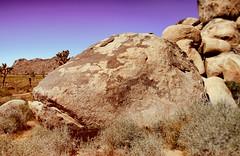 Trout Mask Replica (6079 Jones, P) Tags: canon eos 1200d california usa america sanbernardinocounty riversidecounty joshuatree nationalpark img2700 tamronsp1024mmdiii wideanglelens hoyahrtcirpluv circularpolarizer rock boulder fish face captainbeefheart nikcollection analogefex purple sky desert