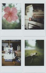 today (breeze.kaze) Tags: instantfilm fujiinstaxminifilm mintinstantflextl70 f8 autumn rain hibiscusrosasinensis flower musiccd moviecalender greenmoss