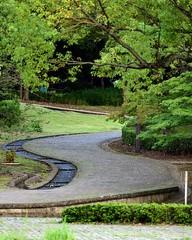 Twisty stroll (Abhay Parvate) Tags: 多摩中央公園 tamacentralpark green nature park garden walk stroll relaxing