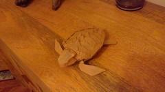 Loggerhead Turtle designed by Satoshi Kamiya folded by me. (webb.colin.1) Tags: satoshi kamiya loggerhead turtle origami