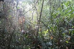 Morning sunshine in the rainforest (Bex.Walton) Tags: malaysia asia travel borneo sabah borneoecotours wildlife sukau kinabatangan kinabatanganriver
