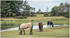Threes (A Journey With A New Camera) Tags: dorset newforest horse pony newforestpony lake pond hatchetpond