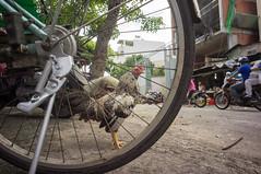 (kuuan) Tags: voigtländerheliarf4515mm manualfocus mf voigtländer15mm aspherical f4515mm superwideheliar apsc sonynex5n saigon hcmc vietnam chicken street wheel