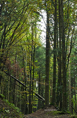 Foliage in the woods of Camaldoli (RoyBatty83) Tags: pentax pentaxk5 pentaxiani 55300 pentaxdahd55300mmf458edwr pentaxdahd55300wr dahd55300wr camaldoli casentino parconaturale tuscany appennino appennine parconaturaledelleforestecasentinesi lama fangacci scalandrini ridracoli eremodicamaldoli trekking hike hiking green nature naturephotography trees woods naturalparks autumncolors autumn autumnleaves