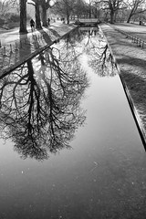 Clissold Park reflections (Francis Mansell) Tags: stokenewington clissoldpark reflection water monochrome blackwhite niksilverefexpro2 london tree plant bicycle cyclist pond bridge park newriver
