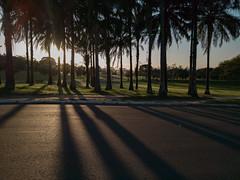 Mobile Photos (Allison de Castro) Tags: rural rj capivara brasil rio de janeiro moto g g7 100 anos universidade ufrrj pôr do sol sunset palm tree palmeira