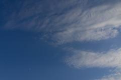 DSC09654 (Zengame) Tags: kyufurukawagardens rx rx1 rx1r sonydscrx1rsonnart235 sonnart235 sony zeiss garden gardens japan tokyo ソニー ツアイス 庭園 日本 旧古河庭園 東京 東京都