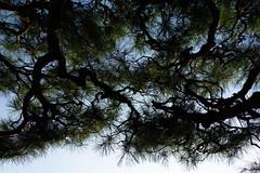 DSC09636 (Zengame) Tags: kyufurukawagardens rx rx1 rx1r sonydscrx1rsonnart235 sonnart235 sony zeiss garden gardens japan tokyo ソニー ツアイス 庭園 日本 旧古河庭園 東京 東京都
