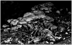 Mushroom Season I (LeonardoDaQuirm) Tags: mushroom pilz forest wald autumn fall herbst