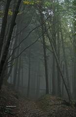 Misty path in the woods (RoyBatty83) Tags: pentax pentaxk5 pentaxiani 55300 pentaxdahd55300mmf458edwr pentaxdahd55300wr dahd55300wr camaldoli casentino parconaturale tuscany appennino appennine parconaturaledelleforestecasentinesi lama fangacci scalandrini ridracoli eremodicamaldoli trekking hike hiking green nature naturephotography trees woods naturalparks autumncolors autumn autumnleaves