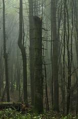 Lonely tree (RoyBatty83) Tags: pentax pentaxk5 pentaxiani 55300 pentaxdahd55300mmf458edwr pentaxdahd55300wr dahd55300wr camaldoli casentino parconaturale tuscany appennino appennine parconaturaledelleforestecasentinesi lama fangacci scalandrini ridracoli eremodicamaldoli trekking hike hiking green nature naturephotography trees woods naturalparks autumncolors autumn autumnleaves