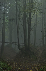 Mist in the woods (RoyBatty83) Tags: pentax pentaxk5 pentaxiani 55300 pentaxdahd55300mmf458edwr pentaxdahd55300wr dahd55300wr camaldoli casentino parconaturale tuscany appennino appennine parconaturaledelleforestecasentinesi lama fangacci scalandrini ridracoli eremodicamaldoli trekking hike hiking green nature naturephotography trees woods naturalparks autumncolors autumn autumnleaves