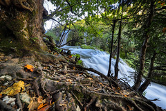 Roots And Stream (orkomedix) Tags: canon eosr croatia plitvice water trees phototrip nd filter woods leaves wide angle 14mmf28 samyang waterfall