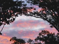 Tender sky.    #sky #skies #clouds #sunrise #sunrises #nature #natural #landscape #samsung #s10 #lightroom (andyhernandez6) Tags: sky sunrise samsung sunrises s10 natural nature skies clouds lightroom landscape
