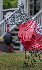 College football tug of war - 2019-10-05_25 (Paul and Nalva) Tags: nx500 samsungnx500 fultoninfocusphotowalk
