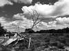 wandelen op de grens (Ingrid Philips) Tags: wandelen wolken zw blackwhite mono clouds grens natuurmonumenten border nederland netherlands natuur landschap bw panasonic lumix