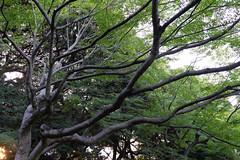 DSC09660 (Zengame) Tags: kyufurukawagardens rx rx1 rx1r sonydscrx1rsonnart235 sonnart235 sony zeiss garden gardens japan tokyo ソニー ツアイス 庭園 日本 旧古河庭園 東京 東京都